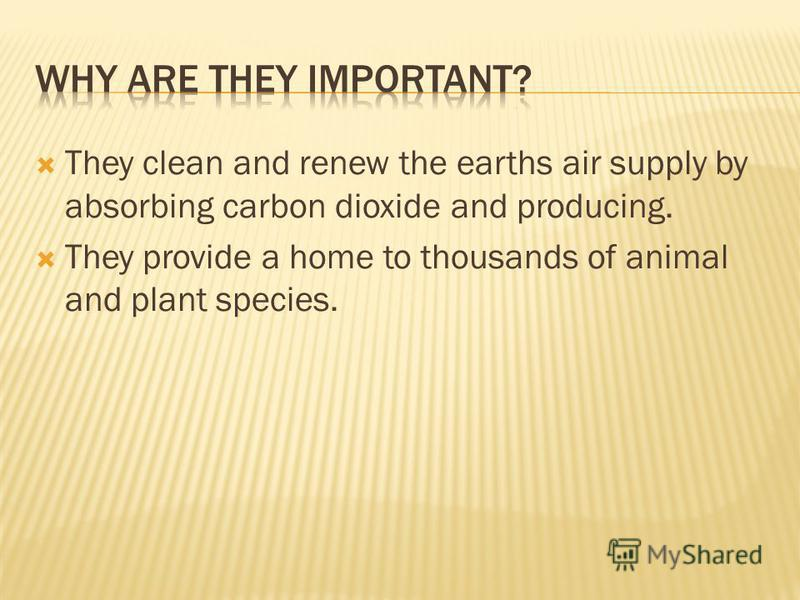 They clean and renew the earths air supply by absorbing carbon dioxide and producing. They provide a home to thousands of animal and plant species.