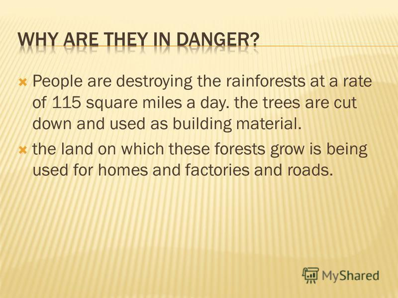 People are destroying the rainforests at a rate of 115 square miles a day. the trees are cut down and used as building material. the land on which these forests grow is being used for homes and factories and roads.