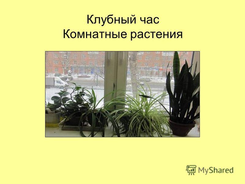 Клубный час Комнатные растения