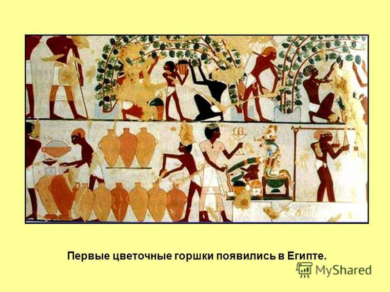 Первые цветочные горшки появились в Египте.