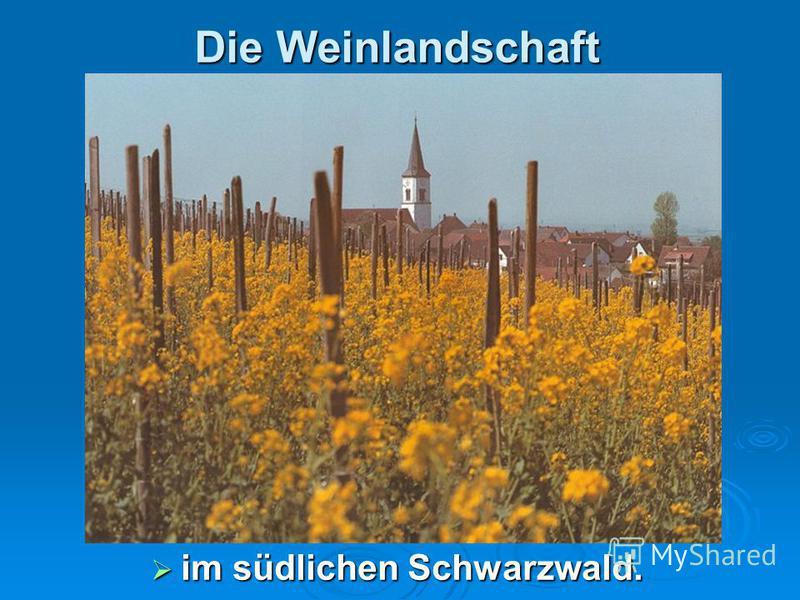 Die Weinlandschaft im südlichen Schwarzwald. im südlichen Schwarzwald.