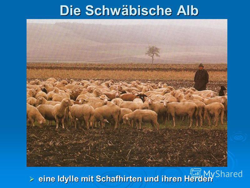 Die Schwäbische Alb eine Idylle mit Schafhirten und ihren Herden eine Idylle mit Schafhirten und ihren Herden