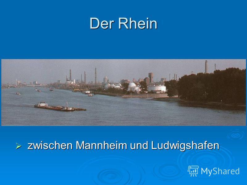Der Rhein zwischen Mannheim und Ludwigshafen zwischen Mannheim und Ludwigshafen