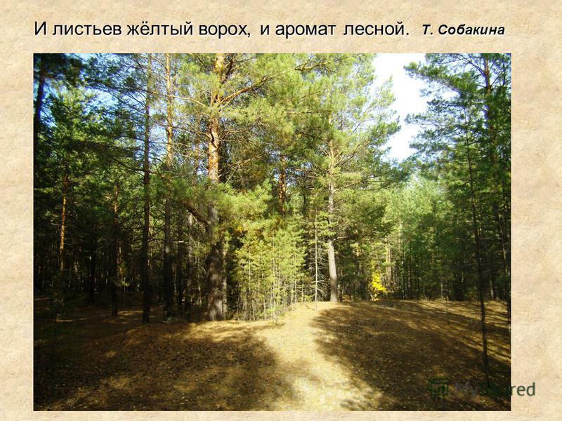 И листьев жёлтый ворох, и аромат лесной. Т. Собакина