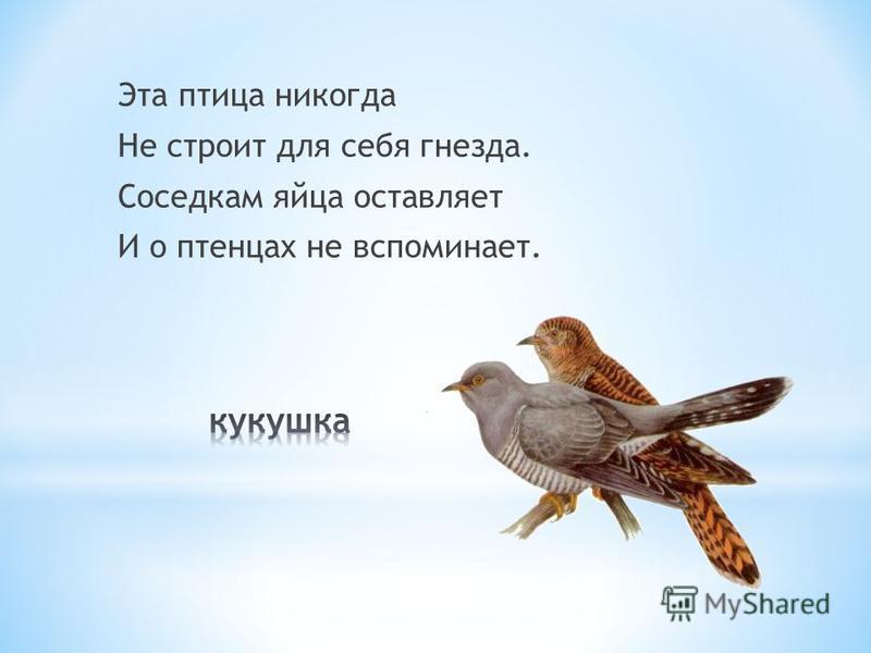 Эта птица никогда Не строит для себя гнезда. Соседкам яйца оставляет И о птенцах не вспоминает.