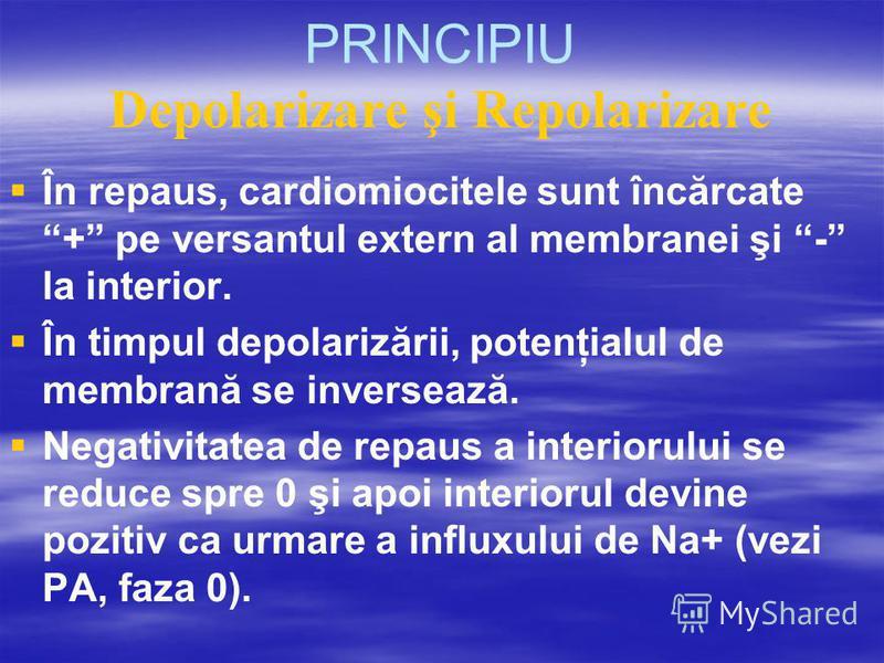 PRINCIPIU Depolarizare şi Repolarizare În repaus, cardiomiocitele sunt încărcate + pe versantul extern al membranei şi - la interior. În timpul depolarizării, potenţialul de membrană se inversează. Negativitatea de repaus a interiorului se reduce spr