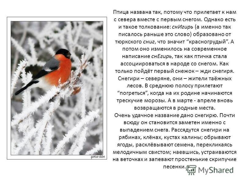 Отгадайте загадку Пусть я птичка – невеличка, У меня, друзья, привычка - Как начнутся холода, Прямо с севера - сюда.