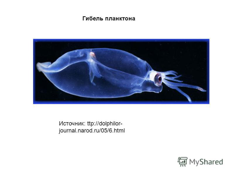 Источник: ttp://dolphilor- journal.narod.ru/05/6. html Гибель планктона