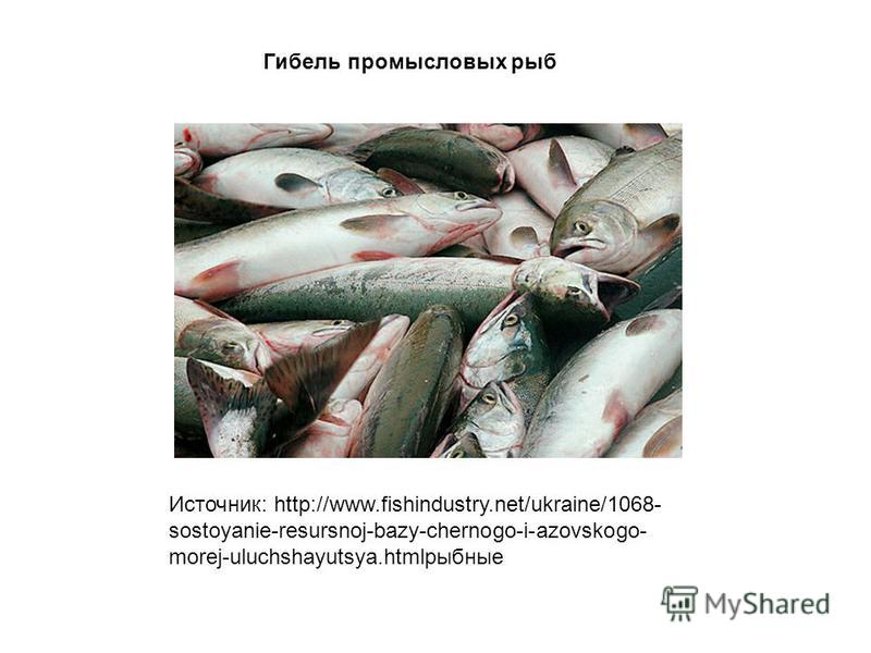 Источник: http://www.fishindustry.net/ukraine/1068- sostoyanie-resursnoj-bazy-chernogo-i-azovskogo- morej-uluchshayutsya.htmlрыбные Гибель промысловых рыб