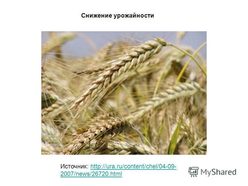 Источник: http://ura.ru/content/chel/04-09- 2007/news/26720.htmlhttp://ura.ru/content/chel/04-09- 2007/news/26720. html Снижение урожайности