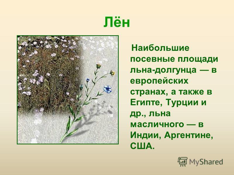 Лён Наибольшие посевные площади льна-долгунца в европейских странах, а также в Египте, Турции и др., льна масличного в Индии, Аргентине, США.