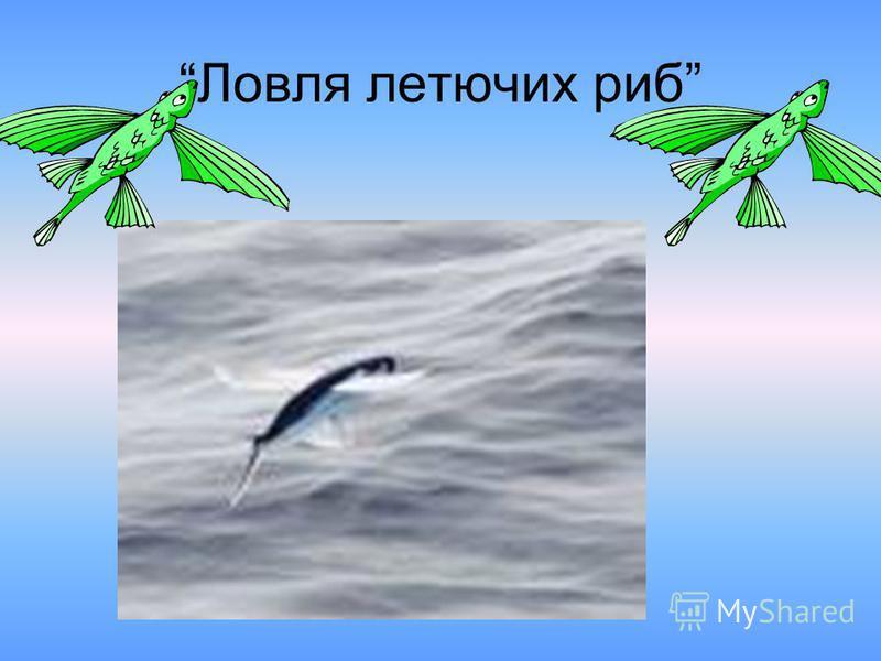 Ловля летючих риб