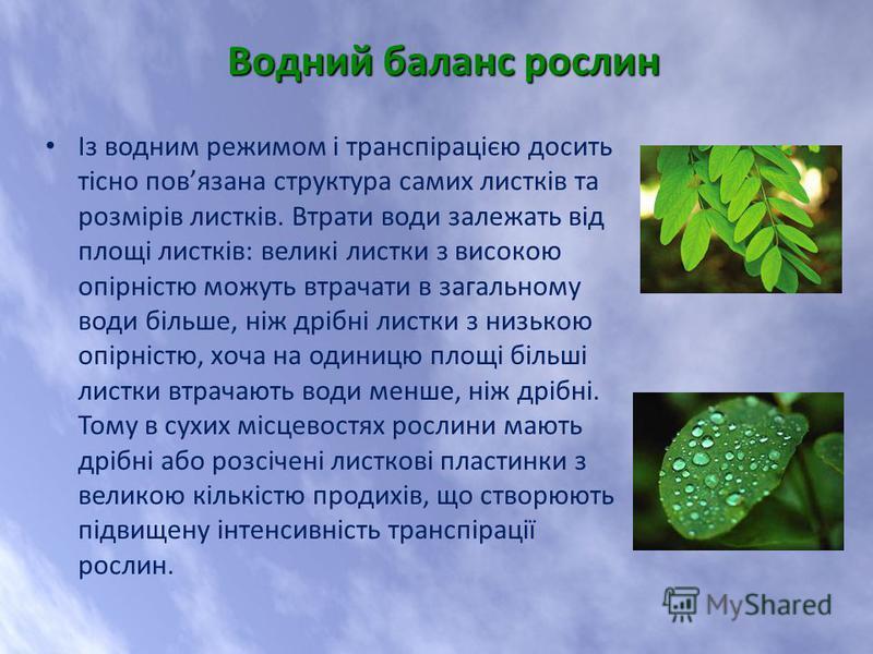 Із водним режимом і транспірацією досить тісно повязана структура самих листків та розмірів листків. Втрати води залежать від площі листків: великі листки з високою опірністю можуть втрачати в загальному води більше, ніж дрібні листки з низькою опірн