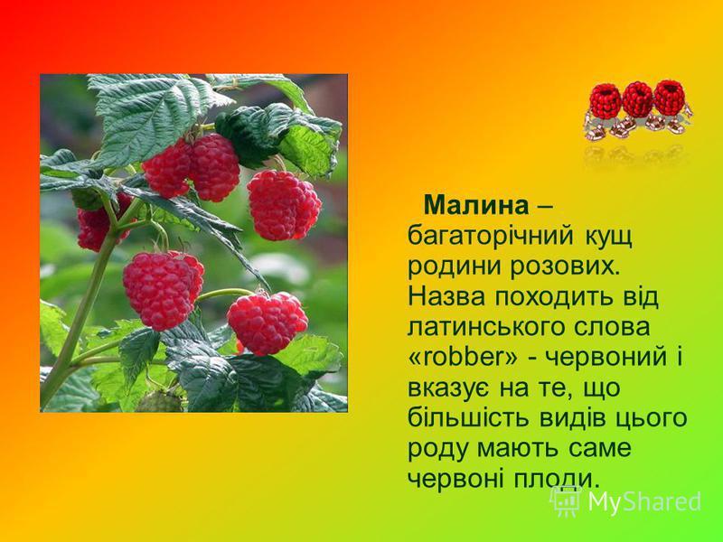 Малина – багаторічний кущ родини розових. Назва походить від латинського слова «robber» - червоний і вказує на те, що більшість видів цього роду мають саме червоні плоди.