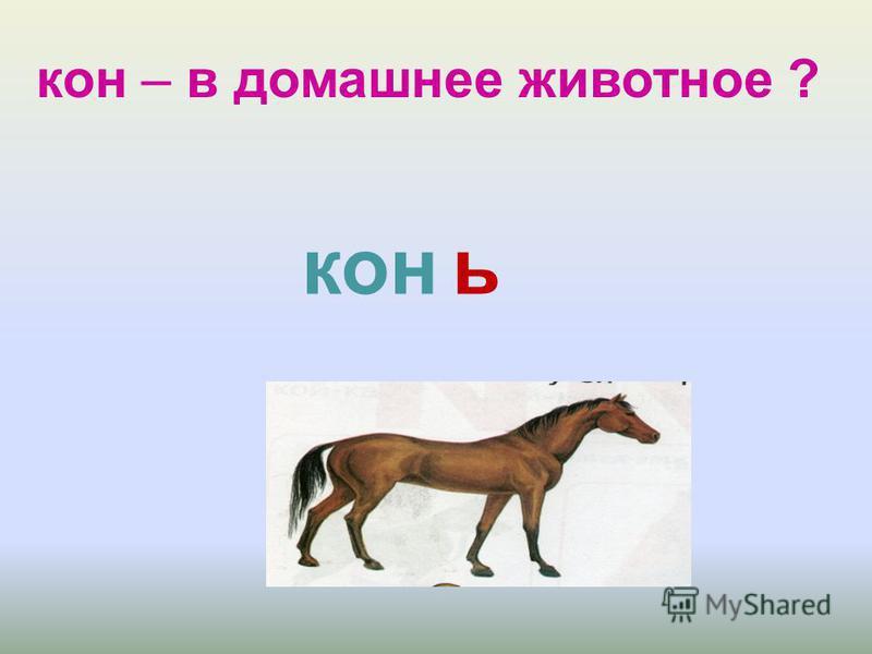 кон – в домашнее животное ? конь