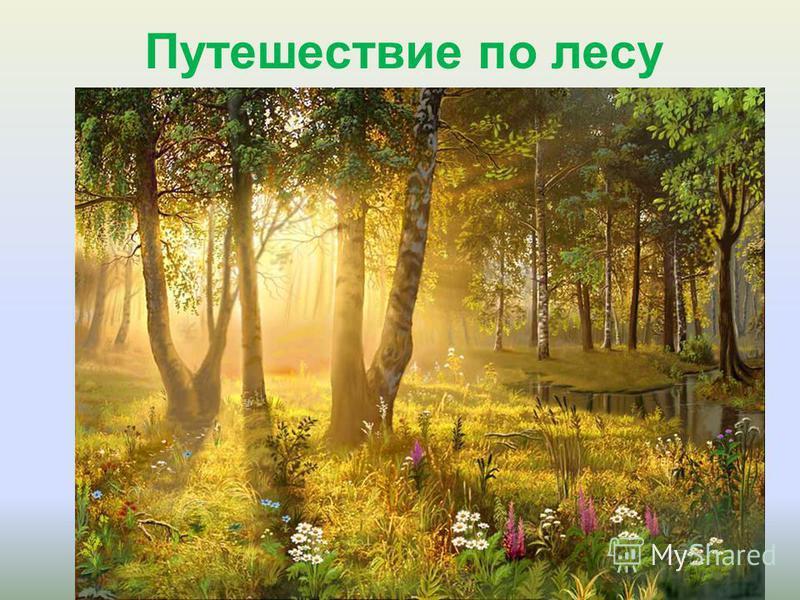 Путешествие по лесу