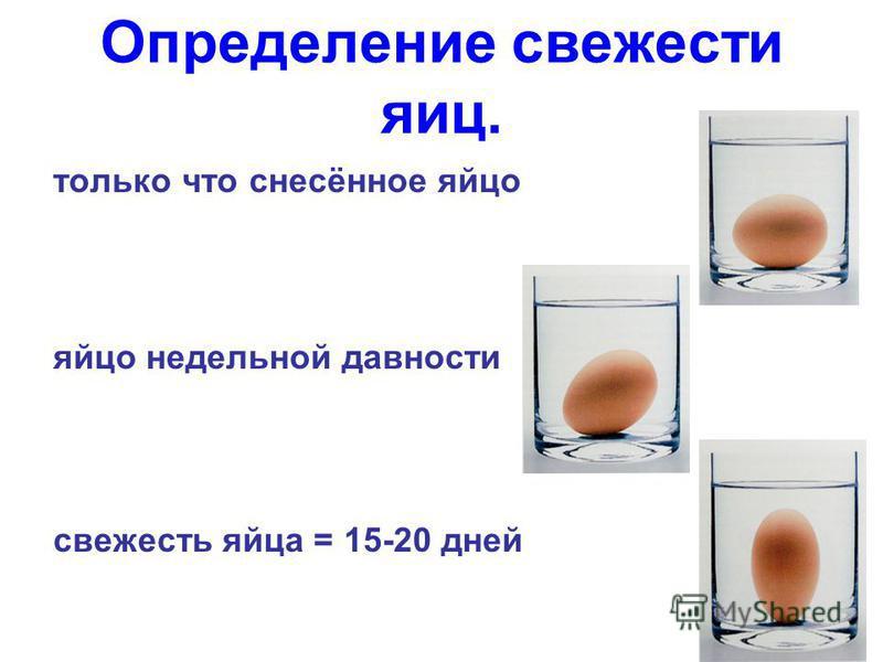 только что снесённое яйцо яйцо недельной давности свежесть яйца = 15-20 дней Определение свежести яиц.