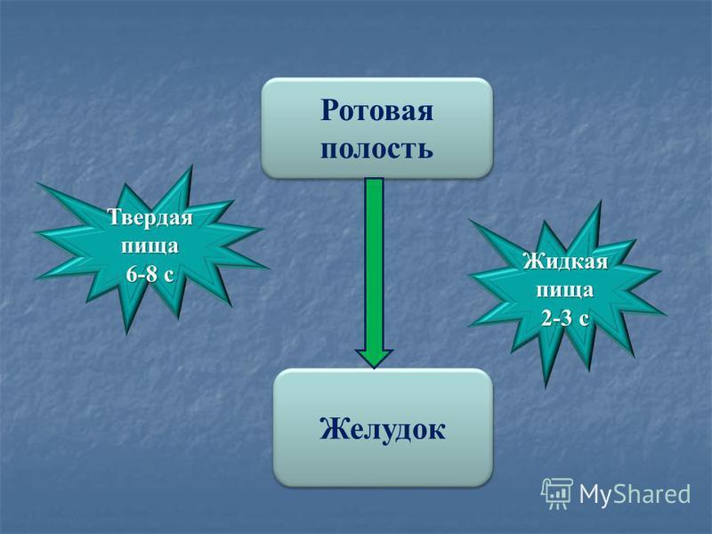 Ротовая полость Ротовая полость Желудок Жидкая пища 2-3 с Твердая пища 6-8 с
