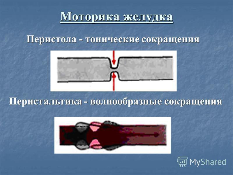 Моторика желудка Перистальтика - волнообразные сокращения Перистола - тонические сокращения