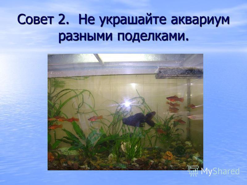 Совет 2. Не украшайте аквариум разными поделками.