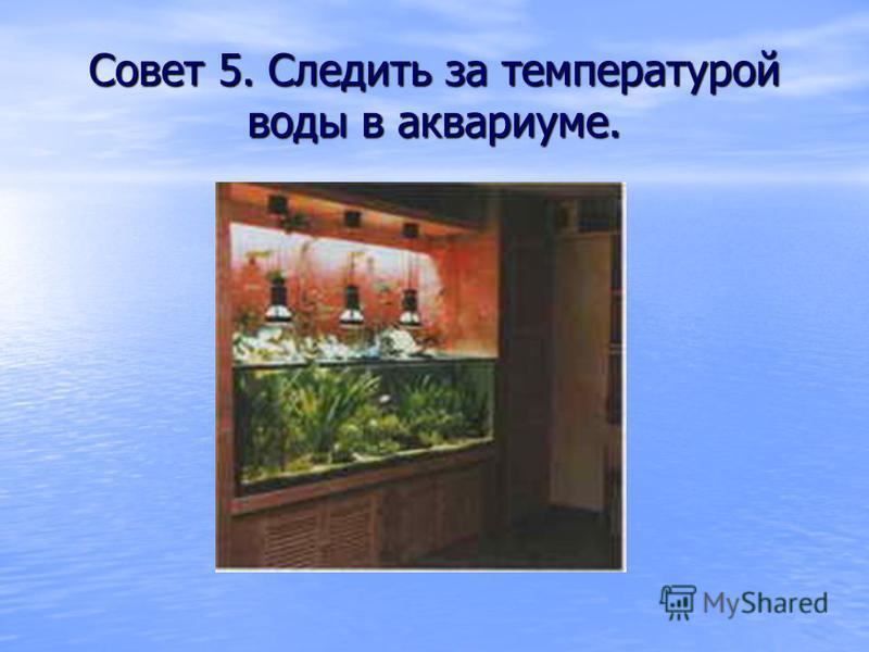 Совет 5. Следить за температурой воды в аквариуме.