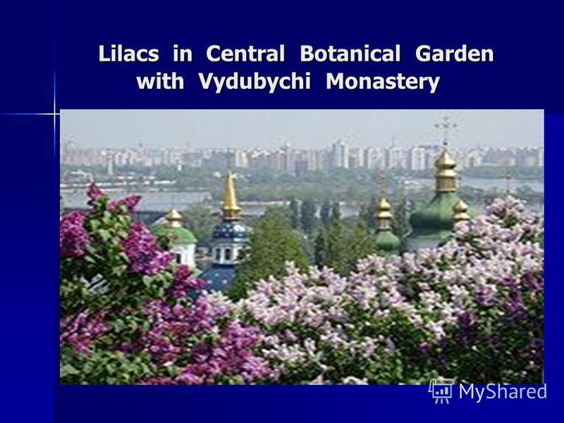 Lilacs in Central Botanical Garden with Vydubychi Monastery Lilacs in Central Botanical Garden with Vydubychi Monastery