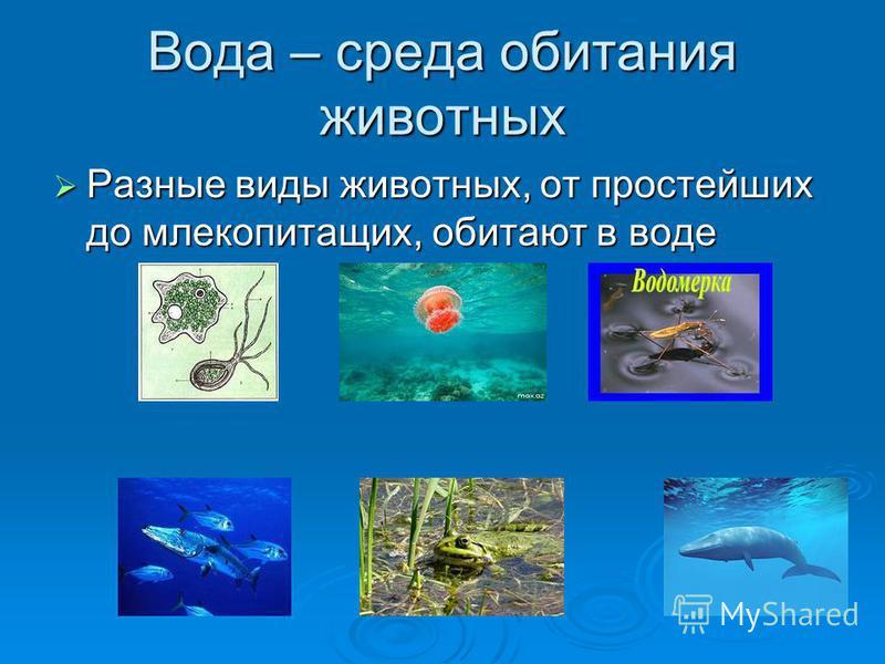 Вода – среда обитания животных Разные виды животных, от простейших до млекопитающих, обитают в воде Разные виды животных, от простейших до млекопитающих, обитают в воде