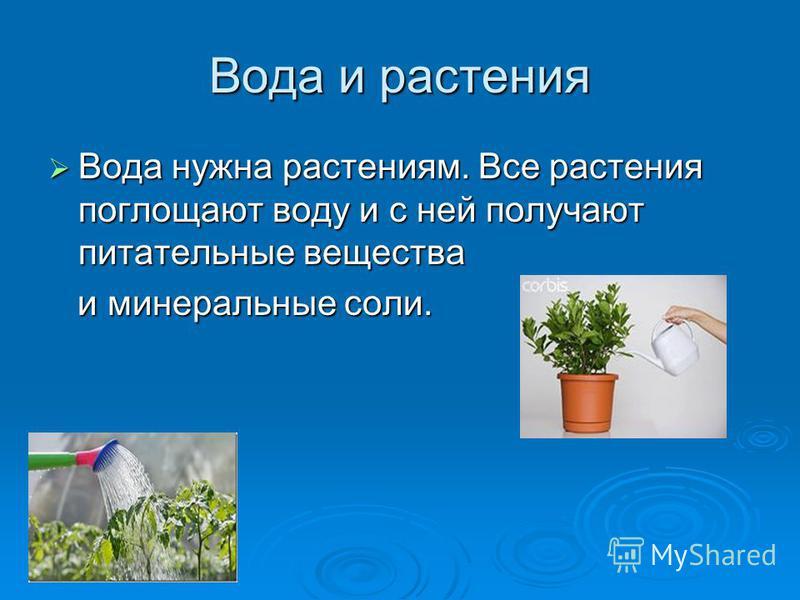 Вода и растения Вода нужна растениям. Вcе растения поглощают воду и с ней получают питательные вещества Вода нужна растениям. Вcе растения поглощают воду и с ней получают питательные вещества и минеральные соли. и минеральные соли.