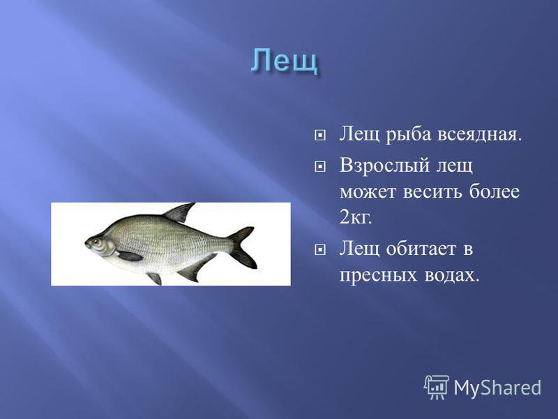 Лещ рыба всеядная. Взрослый лещ может весить более 2 кг. Лещ обитает в пресных водах.