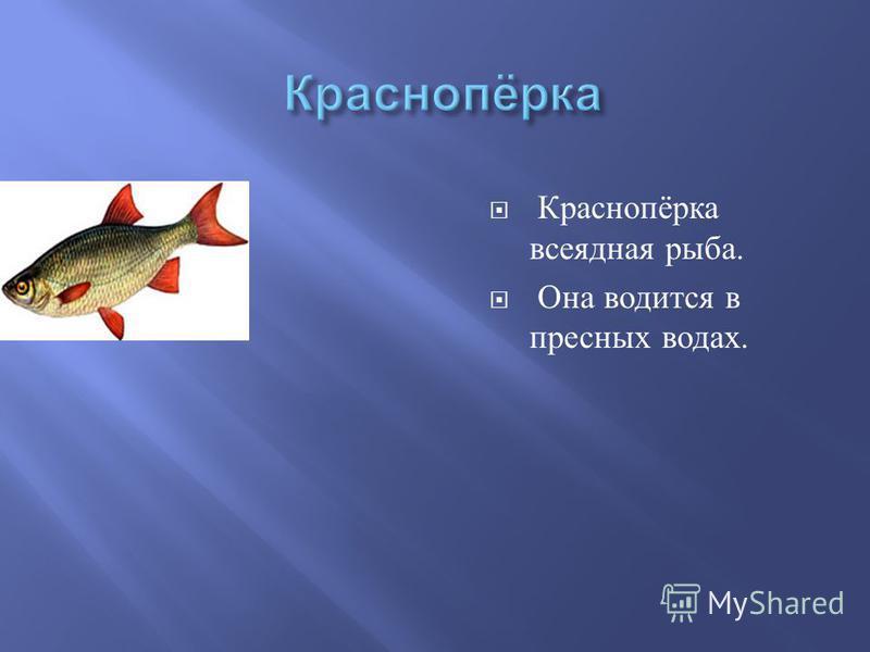 Краснопёрка всеядная рыба. Она водится в пресных водах.
