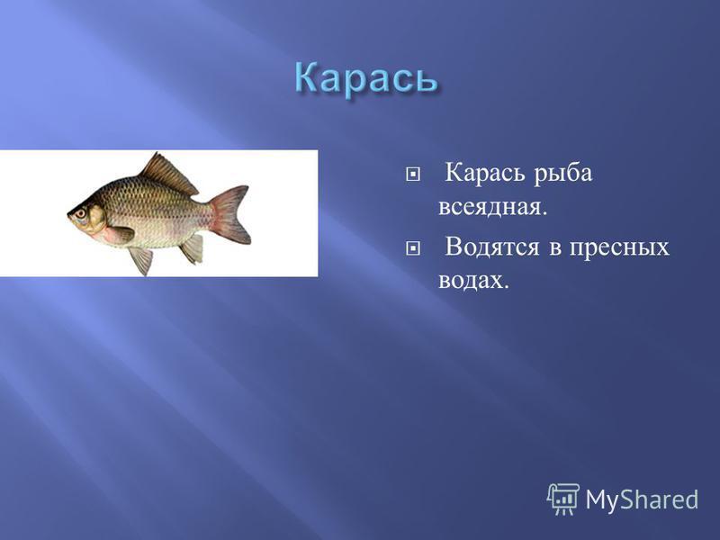 Карась рыба всеядная. Водятся в пресных водах.