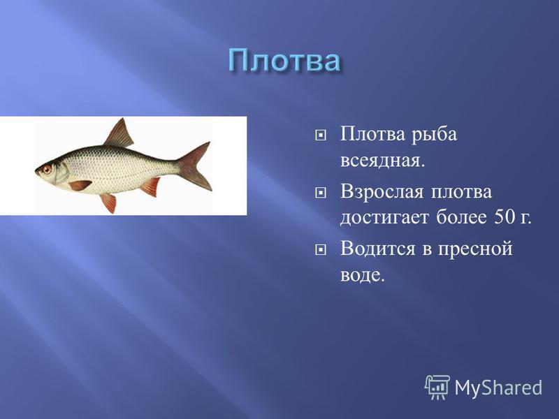 Плотва рыба всеядная. Взрослая плотва достигает более 50 г. Водится в пресной воде.