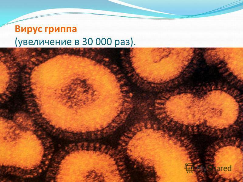 Вирус гриппа (увеличение в 30 000 раз).