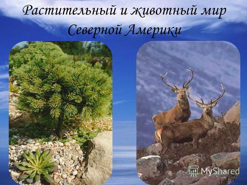 Растительный и животный мир Северной Америки
