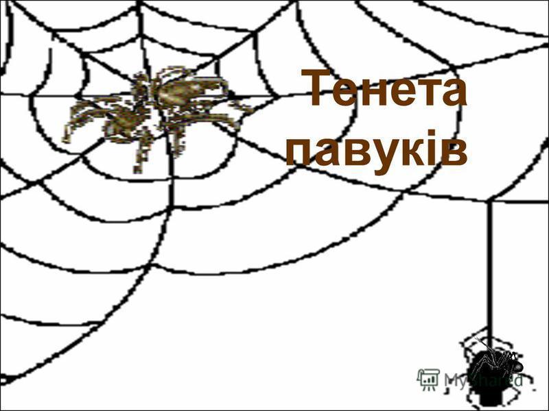 Тенета павуків