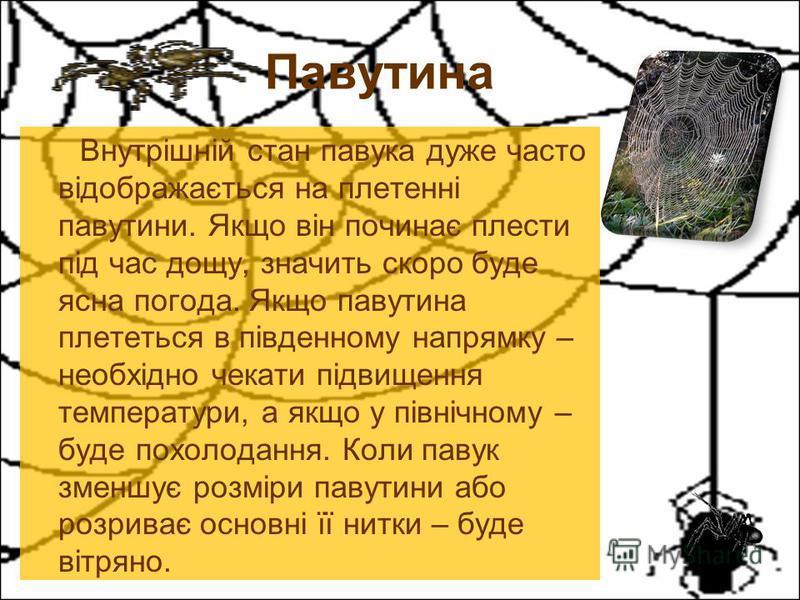 Внутрішній стан павука дуже часто відображається на плетенні павутини. Якщо він починає плести під час дощу, значить скоро буде ясна погода. Якщо павутина плететься в південному напрямку – необхідно чекати підвищення температури, а якщо у північному