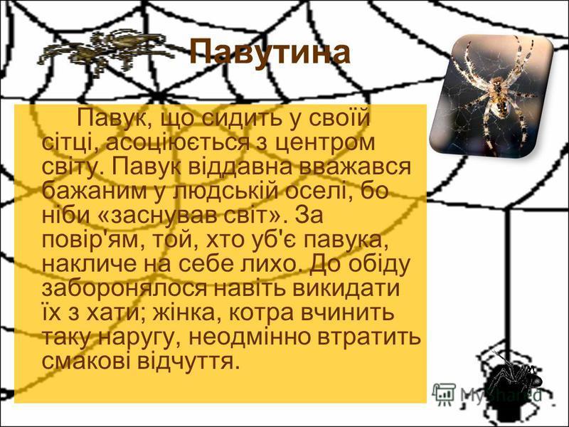 Павук, що сидить у своїй сітці, асоціюється з центром світу. Павук віддавна вважався бажаним у людській оселі, бо ніби «заснував світ». За повір'ям, той, хто уб'є павука, накличе на себе лихо. До обіду заборонялося навіть викидати їх з хати; жінка, к