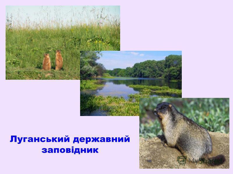 Луганський державний заповідник