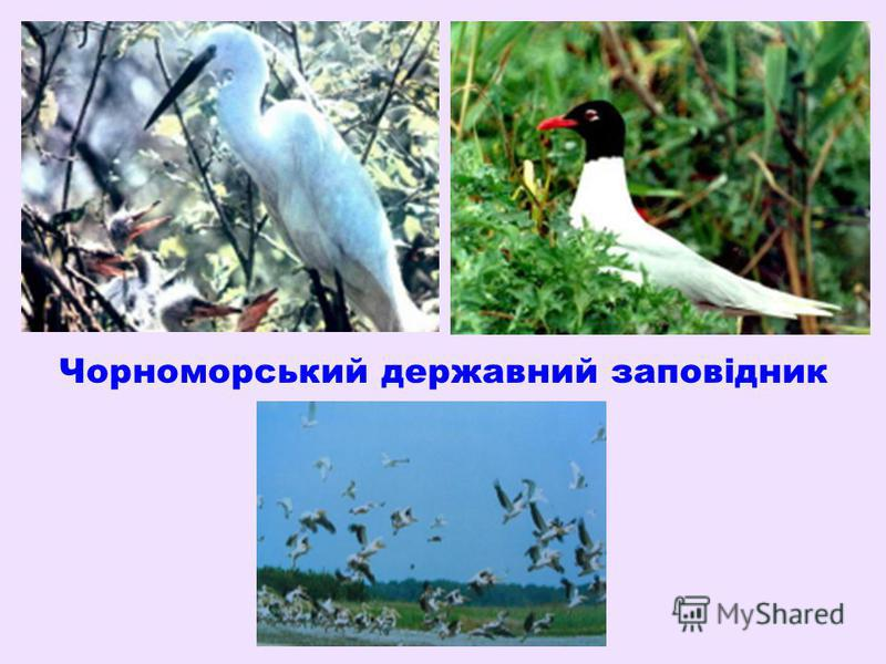 Чорноморський державний заповідник