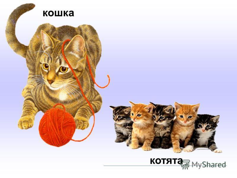 кошка котята