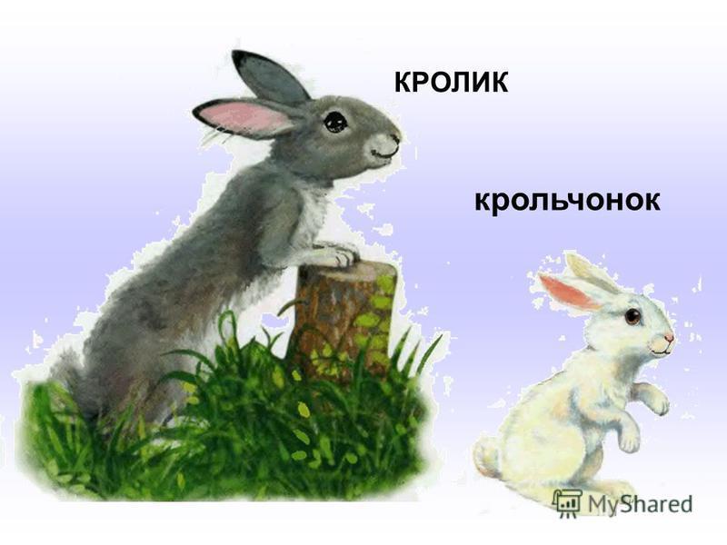 КРОЛИК крольчонок