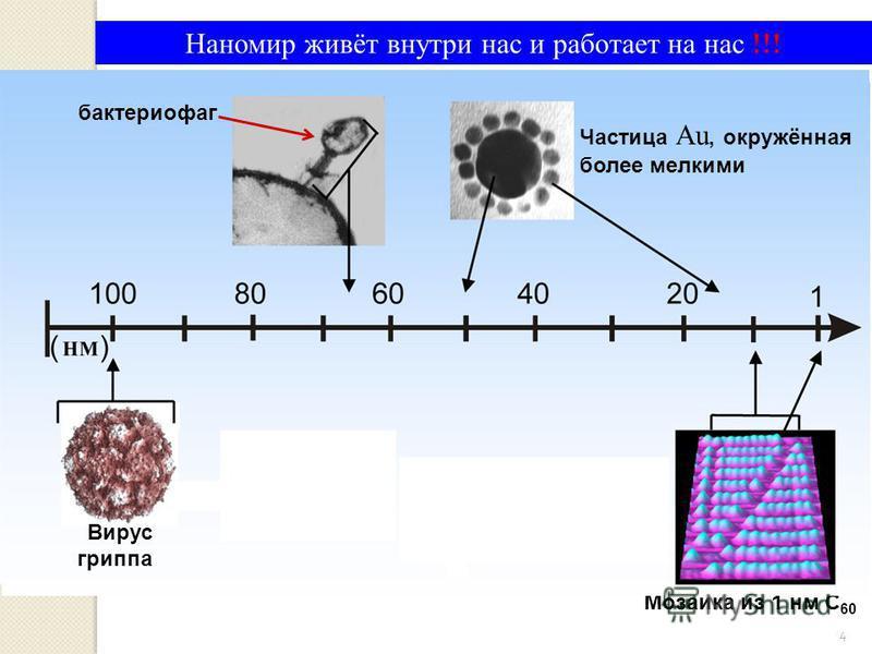 бактериофаг Вирус гриппа Частица Au, окружённая более мелкими Мозаика из 1 нм С 60 Наномир живёт внутри нас и работает на нас !!! бактериофаг Вирус гриппа Частица Au, окружённая более мелкими 4