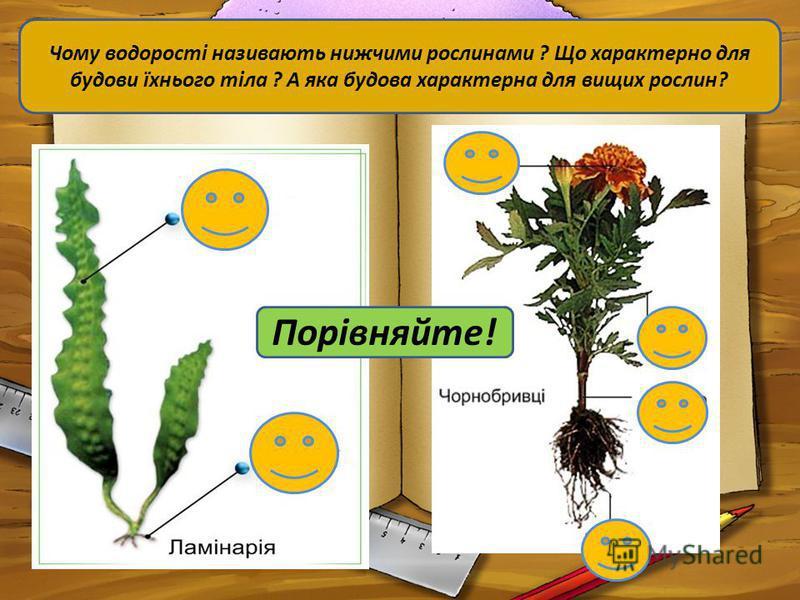 Порівняйте! Чому водорості називають нижчими рослинами ? Що характерно для будови їхнього тіла ? А яка будова характерна для вищих рослин?