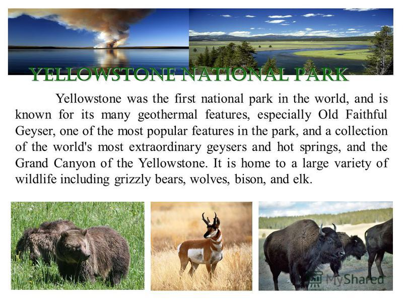 Yellowstone was the first national park in the world, and is known for its many geothermal features, especially Old Faithful Geyser, one of the most popular features in the park, and a collection of the world's most extraordinary geysers and hot spri