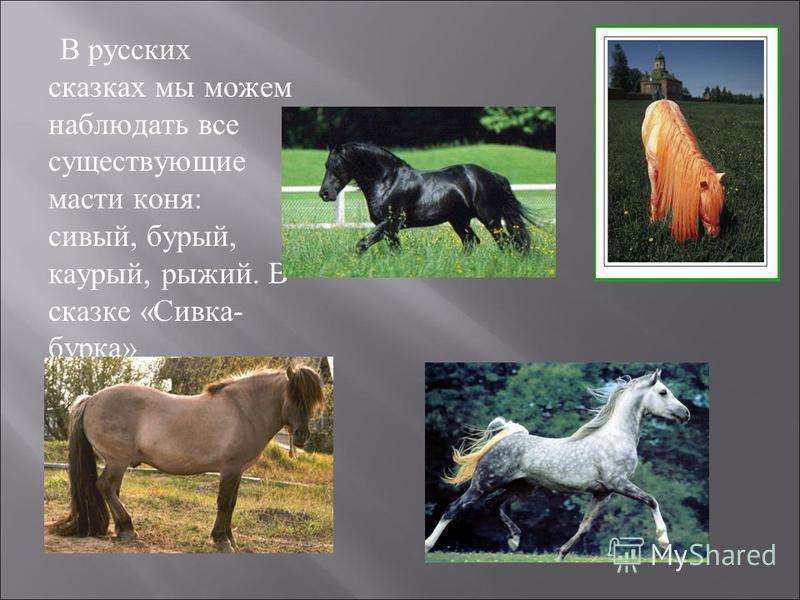 В русских сказках мы можем наблюдать все существующие масти коня: сивый, бурый, каурый, рыжий. В сказке «Сивка- бурка» изображен конь сивой масти.