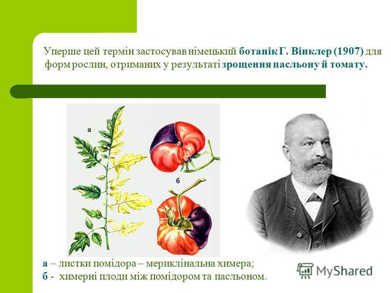 Уперше цей термін застосував німецький ботанік Г. Вінклер (1907) для форм рослин, отриманих у результаті зрощення пасльону й томату. а – листки помідора – мериклінальна химера; б - химерні плоди між помідором та пасльоном.
