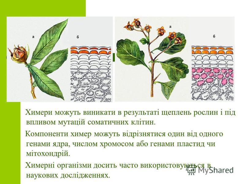 Химери можуть виникати в результаті щеплень рослин і під впливом мутацій соматичних клітин. Компоненти химер можуть відрізнятися один від одного генами ядра, числом хромосом або генами пластид чи мітохондрій. Химерні організми досить часто використов