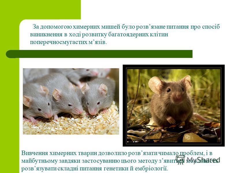 За допомогою химерних мишей було розвязане питання про спосіб виникнення в ході розвитку багатоядерних клітин поперечносмугастих мязів. Вивчення химерних тварин дозволило розвязати чимало проблем, і в майбутньому завдяки застосуванню цього методу зяв