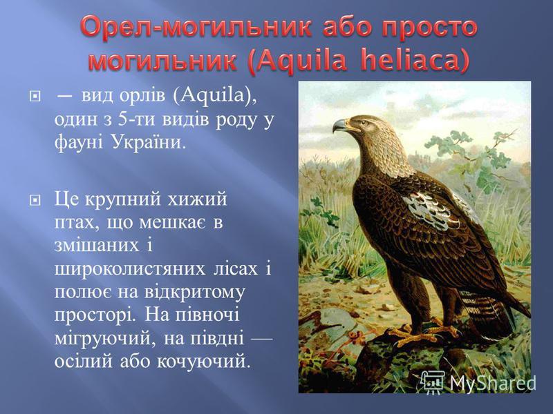 вид орлів (Aquila), один з 5- ти видів роду у фауні України. Це крупний хижий птах, що мешкає в змішаних і широколистяних лісах і полює на відкритому просторі. На півночі мігруючий, на півдні осілий або кочуючий.