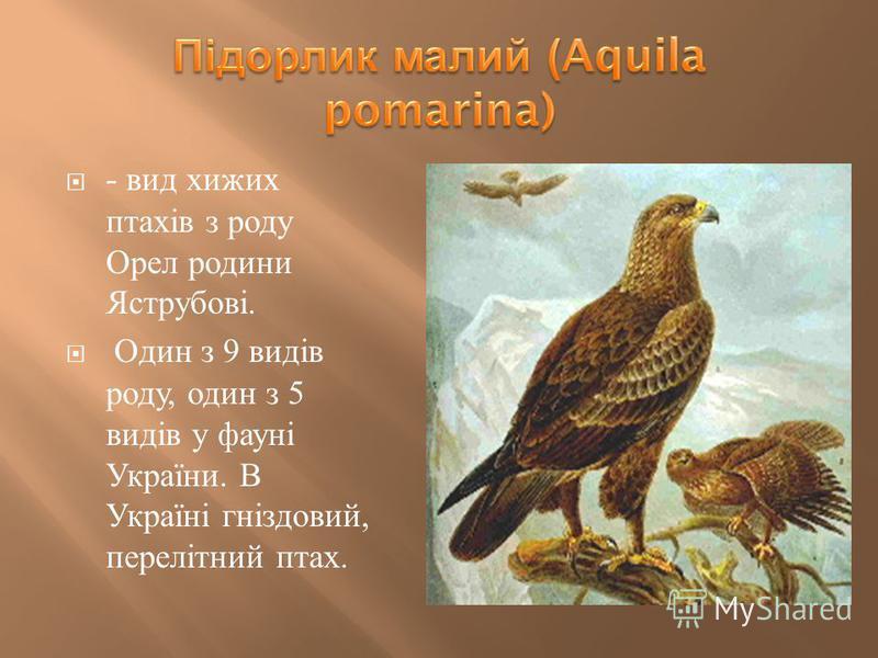 - вид хижих птахів з роду Орел родини Яструбові. Один з 9 видів роду, один з 5 видів у фауні України. В Україні гніздовий, перелітний птах.